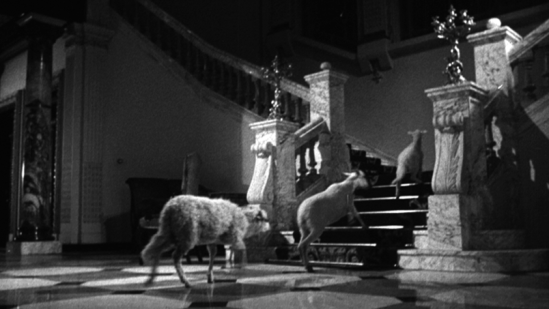 "'The Exterminating Angel""  credit - criterion.com"